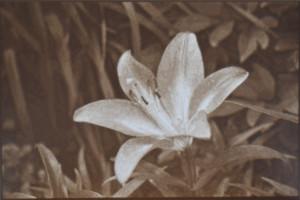 <b>Lithophane of lily</b>